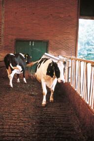 VINK - Viehbürste, Rückenscheuerleiste, Kuhbürste